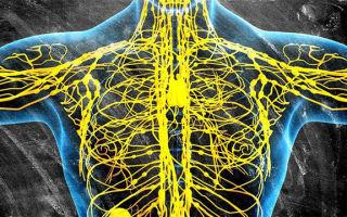 Как работает лимфосистема человека?