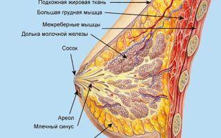 Какие болезни молочных желез у женщин?
