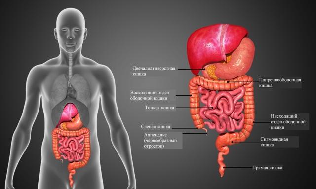 Все про спастический колит: симптомы, лечение, питание для больных