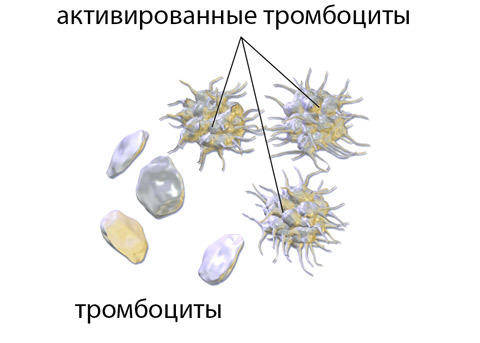 тромбоциты перед месячными