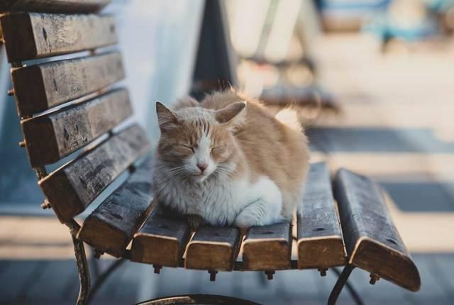 Кошачий лишай у человека: фото, признаки и лечение в домашних условиях