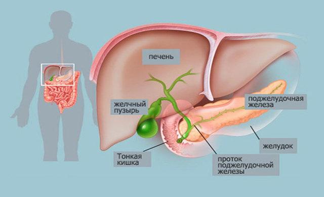 Полип в желчном пузыре: что это такое и как лечить? Симптомы и последствия