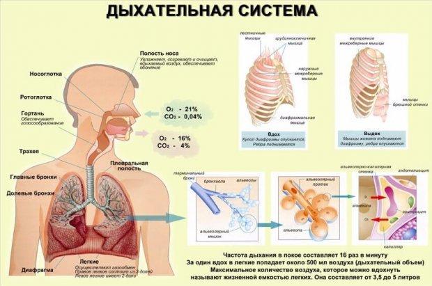 Диафрагмальное дыхание. Как выполнять, польза и вред, техника, упражнения, противопоказания