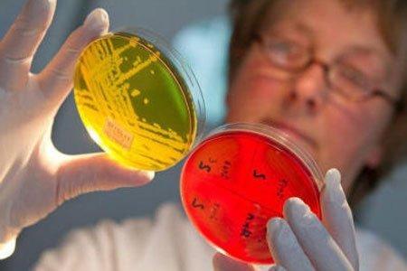 Золотистый стафилококк - что это? Симптомы у взрослых и лечение