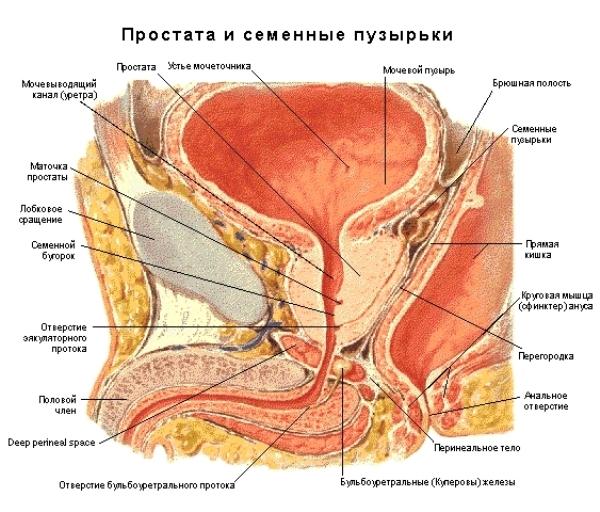 Везикулит: симптомы, причины и лечение у мужчин. Как лечить везикулит