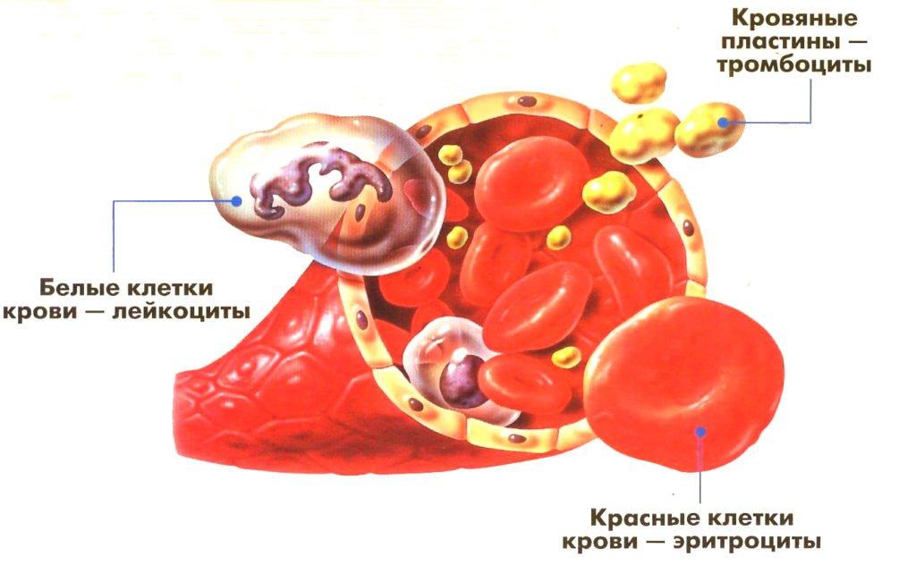 Результаты анализов крови тромбоциты